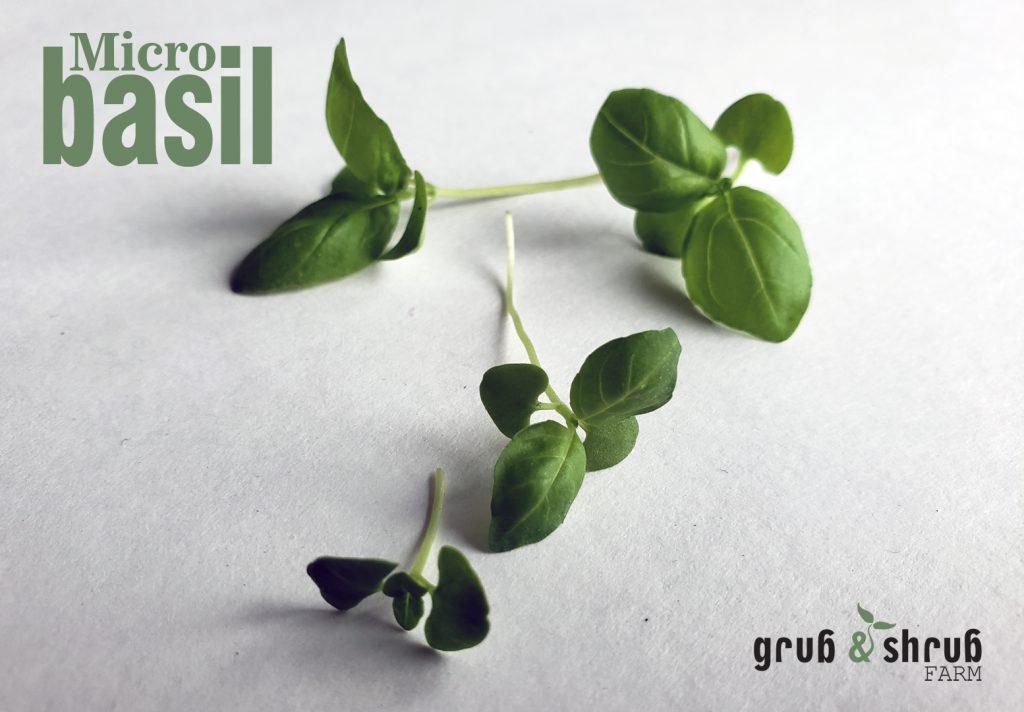 Gryb & Shrub Farms micro basil