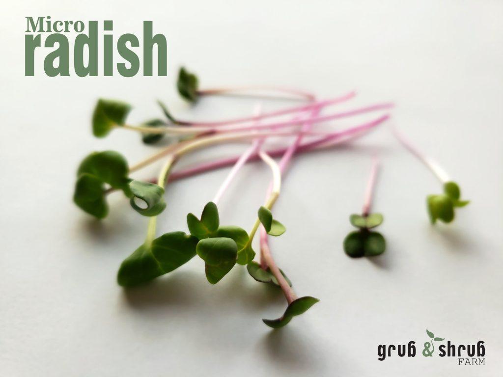 Gryb & Shrub Farms micro radish