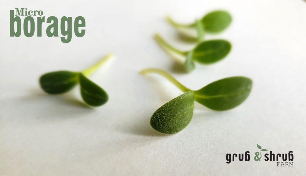 Gryb & Shrub Farms micro borage
